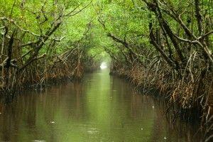 Everglades (10)