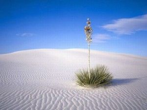 white_sands_national_monument_30