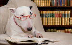 library_dog