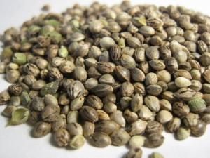 Качественные семена марихуаны статья за культивирование марихуаны