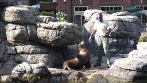 зоопарк бруклин